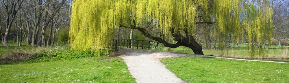 of the weeping willow